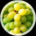 Столовый виноград «Новый подарок Запорожью»