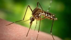 Уничтожение комаров в Днепродзержинске
