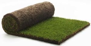 Рулонный газон укладка в Запорожье и области