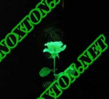 Светящаяся в темноте краска для живых цветов Noxton