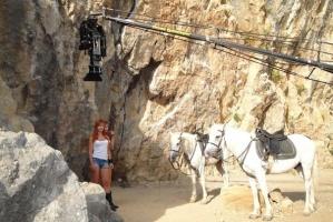 Лошади на любое мероприятие. Лошади в съемках фильмов,клипов и.т.д