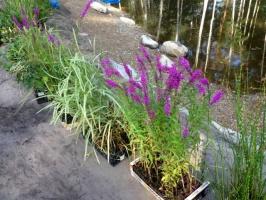Поставки водных растений на объект