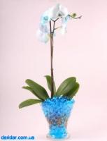 Декоративный цветной гидрогель для цветов 10г