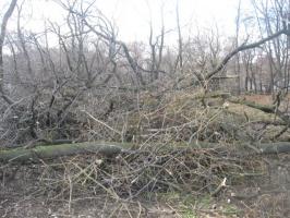 Щепка и древесные отходы