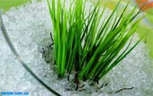Гидрогель влагоудерживатель аграрный суперабсорбент 1кг