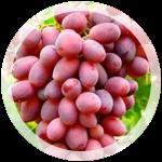 Столовый виноград «Спорт-2»