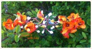 Віночок «Земля сміється квітами.»