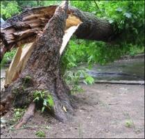 Удаление аварийных  деревьев Донецк и область