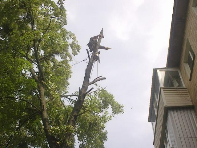 спил аварийного дерева с помощью альпинистских снаряжений, «арбористика»