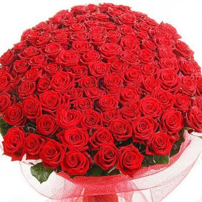 101 роза красного цвета