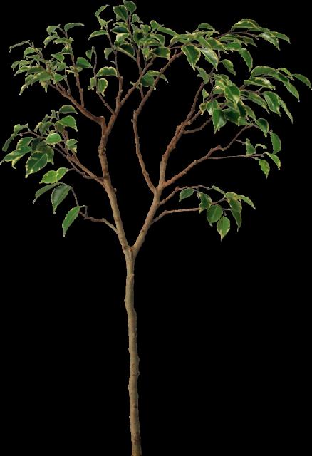 обрезка дерева от 1до 3 лет