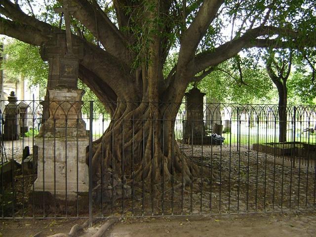 снос дерева на кладбище
