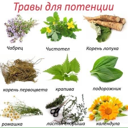 Трави для простатиту что едят от простатита