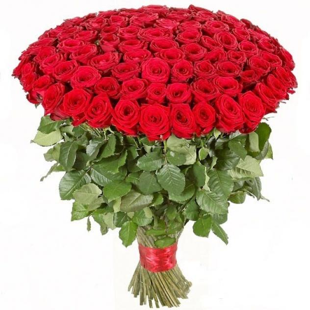 151 бордовая роза 60 см высотой