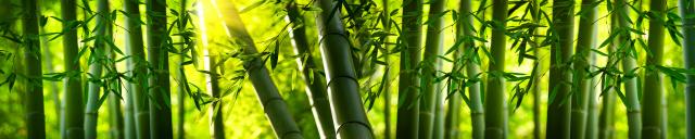 Скинали «Бамбук»