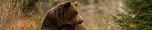 Скинали «Медведь»