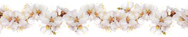 Скинали «Белые цветочки»